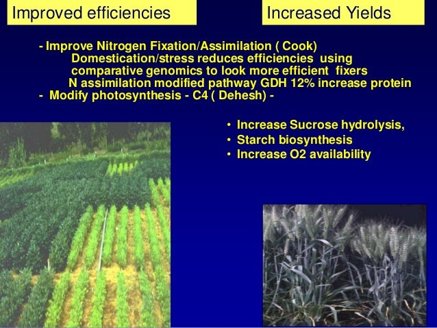 a look at crop irrigation using seawater Effect of irrigation with sea water on germination and  the success of using saline water for economic crop production can be achieved using best.