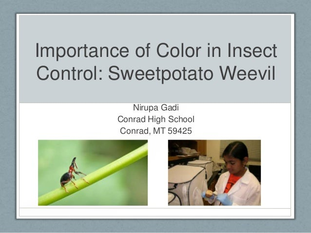 Importance of Color in InsectControl: Sweetpotato Weevil            Nirupa Gadi         Conrad High School         Conrad,...