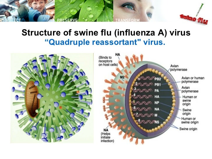 H1N1 Flu - ScienceWatchcom