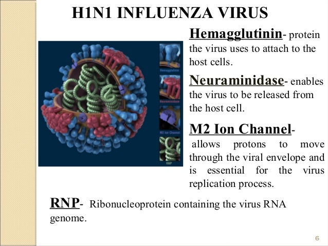 Influenza H1N1 conclusion?