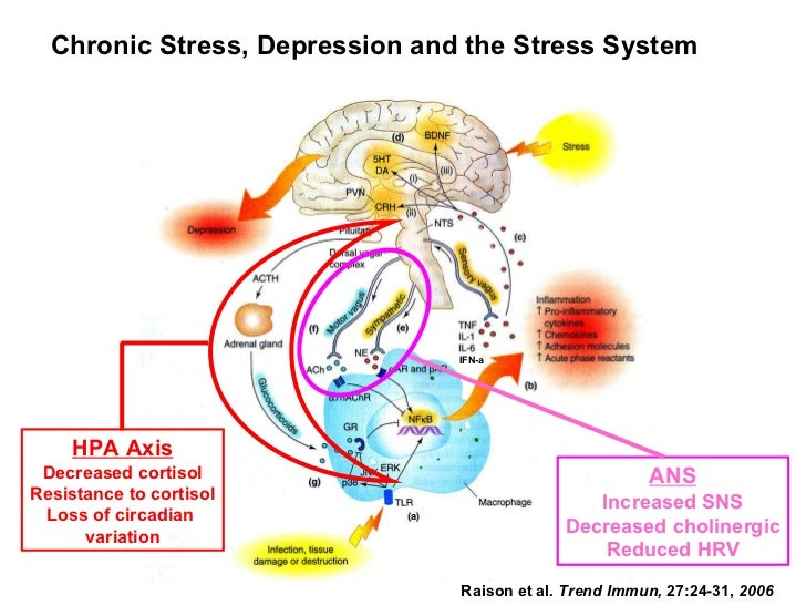 Raison et al . Trend Immun,  27:24-31,  2006 Chronic Stress, Depression and the Stress System IFN-a HPA Axis Decreased cor...