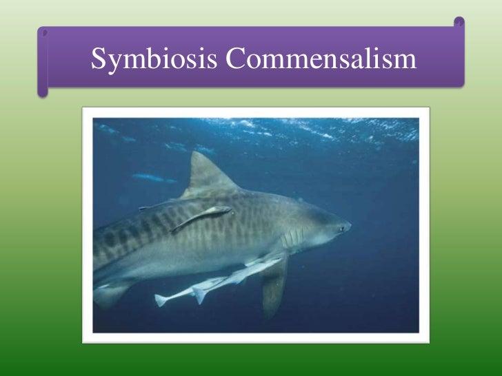 Symbiosis Commensalism