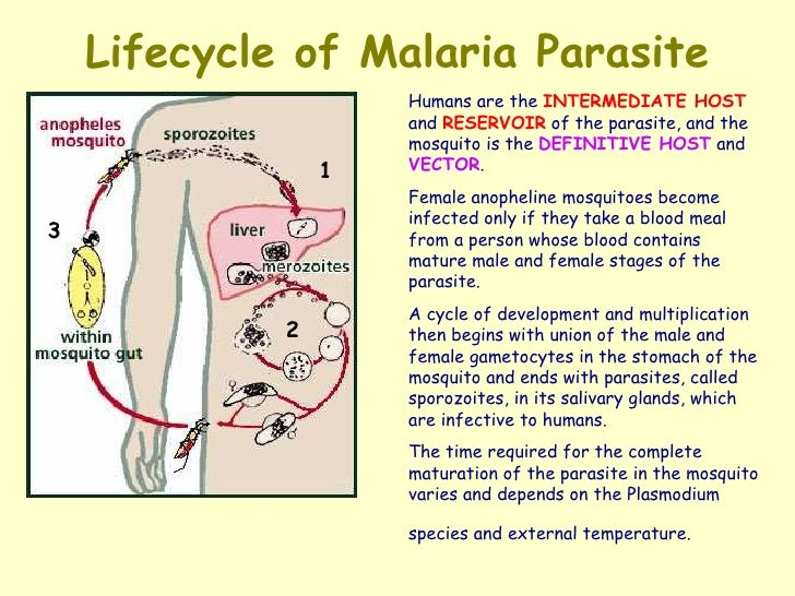 malaria and people relationship