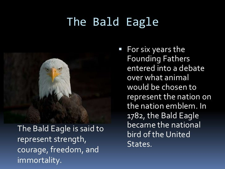 the bald eagle as the us national symbol of freedom The bald eagle was chosen by the founding fathers because it symbolized strength, courage, freedom and immortality the founding fathers felt that the bird encompassed these qualities in the same way that the newly formed united states did.