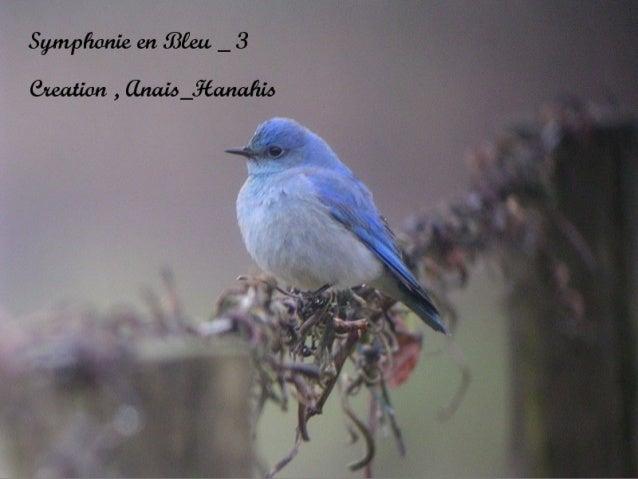 Symphonie en bleu   3   by anais_hanahis