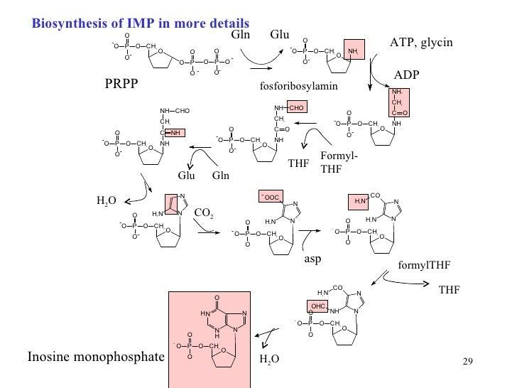 synthesis of inosine monophosphate biosynthesis  u2013 essay birdie