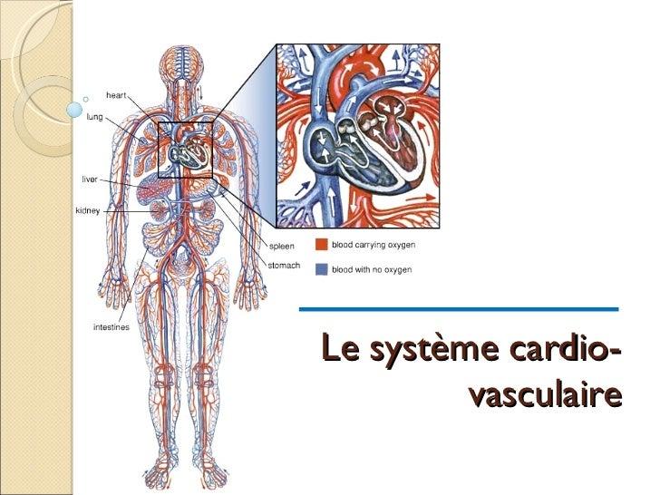 Syst cardio vasc-josee_6avril