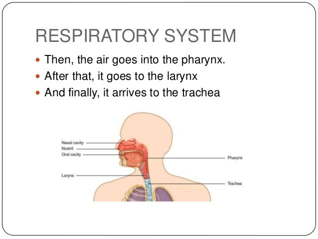 How does arsenic affect the respiratory system?