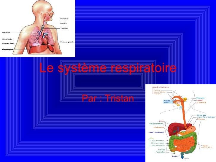 Le système respiratoire Par : Tristan