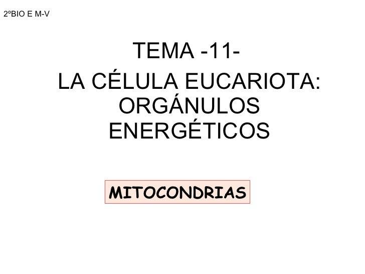 2ºBIO E M-V TEMA -11-  LA CÉLULA EUCARIOTA: ORGÁNULOS ENERGÉTICOS MITOCONDRIAS