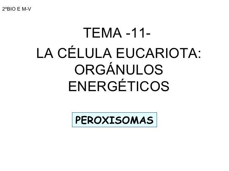 2ºBIO E M-V TEMA -11-  LA CÉLULA EUCARIOTA: ORGÁNULOS ENERGÉTICOS PEROXISOMAS