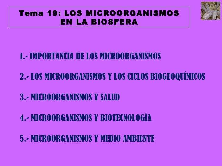T19 importancia microorganismos