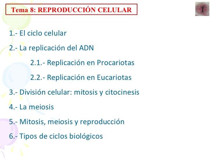 Tema 8: REPRODUCCIÓN CELULAR 1.- El ciclo celular 2.- La replicación del ADN 2.1.- Replicación en Procariotas 2.2.- Replic...