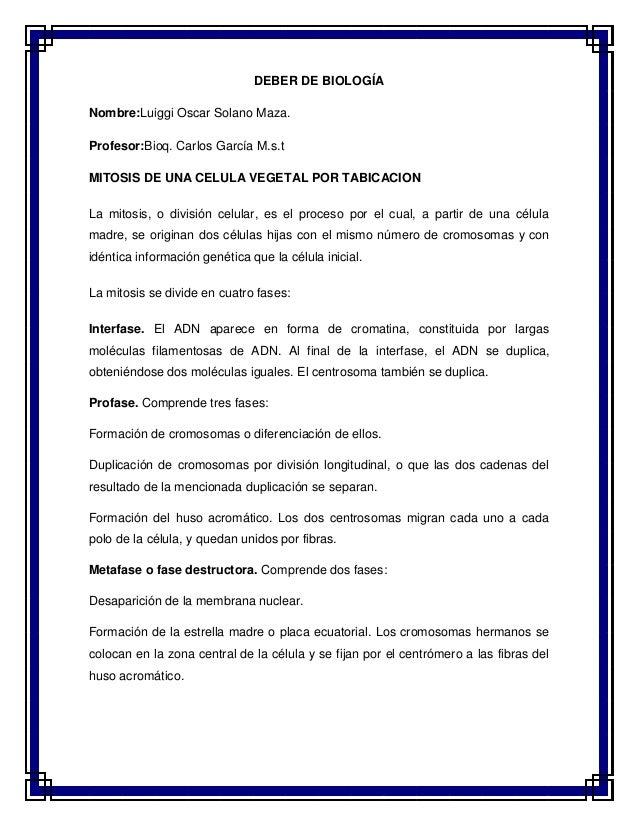 DEBER DE BIOLOGÍA Nombre:Luiggi Oscar Solano Maza. Profesor:Bioq. Carlos García M.s.t MITOSIS DE UNA CELULA VEGETAL POR TA...