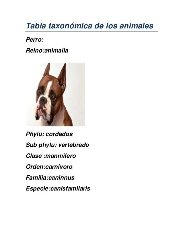 Tabla taxonómica de los animales Perro: Reino:animalia Phylu: cordados Sub phylu: vertebrado Clase :manmifero Orden:carnív...