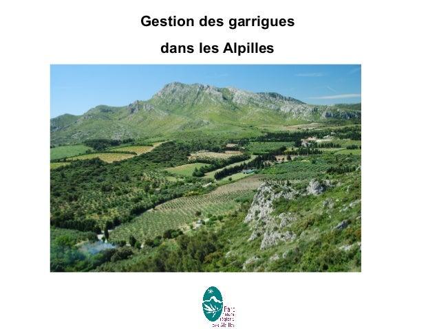 Gestion des garrigues dans les Alpilles