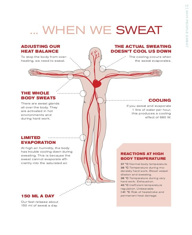 sweat glands feet