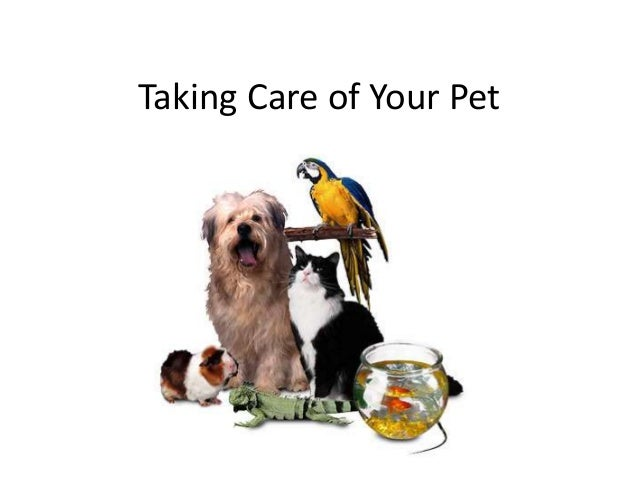 Taking Care of Your Pet