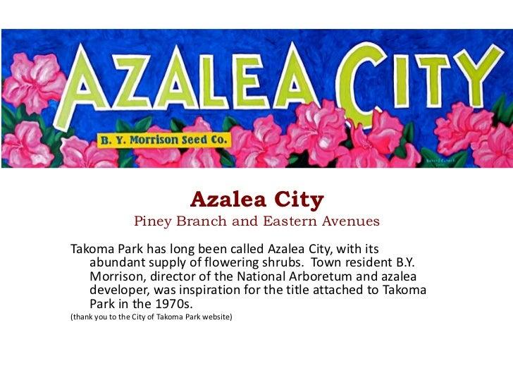 Azalea City<br />Piney Branch and Eastern Avenues<br />Takoma Park has long been called Azalea City, with its abundant sup...