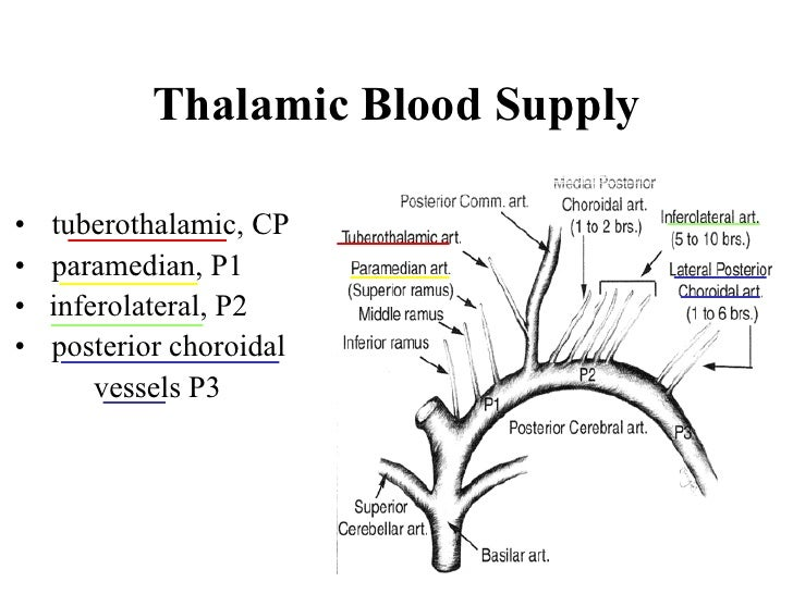 Brachial Plexus 33461274 moreover Chapter 19 Respiratory System 30957665 likewise Page 19 likewise Prairiefalcon together with Haemopis. on dorsal and ventral blood