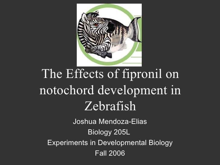 The Effects of fipronil on notochord development in Zebrafish Joshua Mendoza-Elias Biology 205L  Experiments in Developmen...