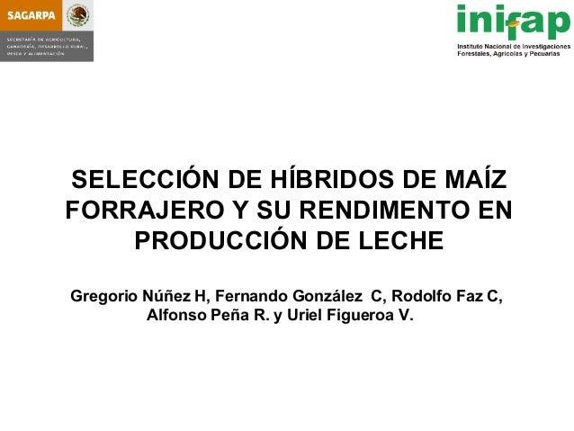SELECCIÓN DE HÍBRIDOS DE MAÍZFORRAJERO Y SU RENDIMENTO EN    PRODUCCIÓN DE LECHEGregorio Núñez H, Fernando González C, Rod...
