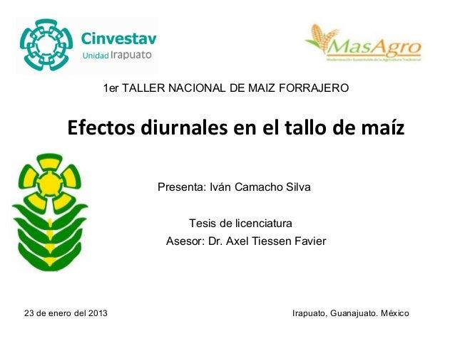 1er TALLER NACIONAL DE MAIZ FORRAJERO          Efectos diurnales en el tallo de maíz                          Presenta: Iv...