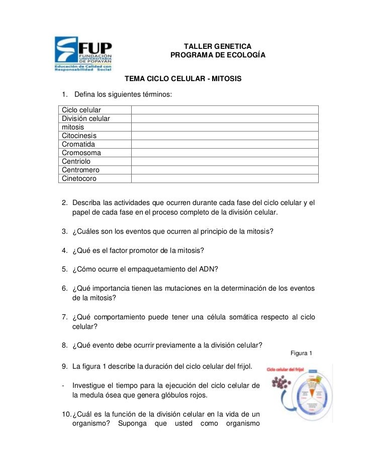 TALLER GENETICA                                     PROGRAMA DE ECOLOGÍA                     TEMA CICLO CELULAR - MITOSIS1...