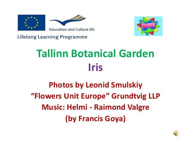 "Tallinn Botanical Garden Iris Photos by Leonid Smulskiy ""Flowers Unit Europe"" Grundtvig LLP Music: Helmi - Raimond Valgre ..."