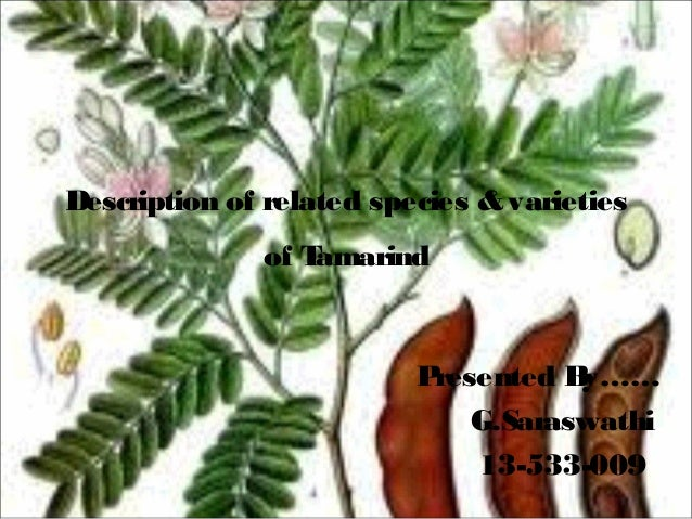 Description of related species & varieties of T amarind  P resented B y…… G.Saraswathi 13-533-009
