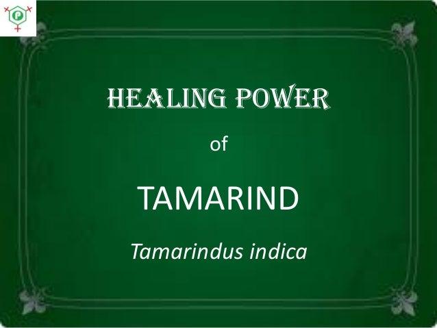 Healing power of TAMARIND Tamarindus indica