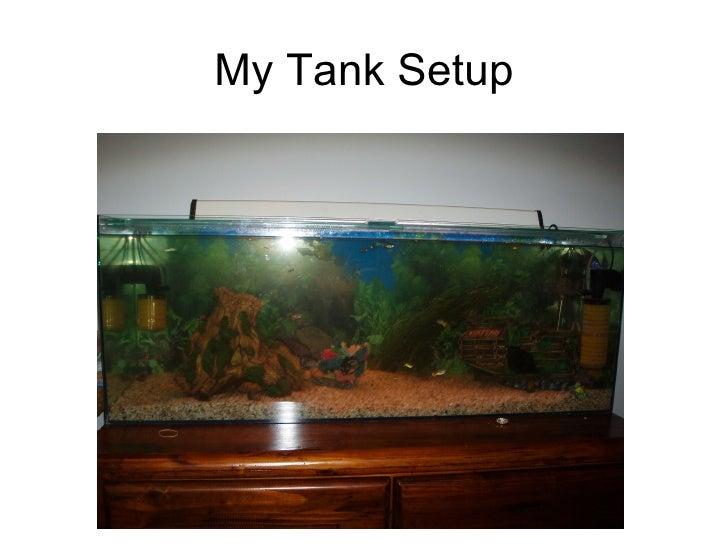 My Tank Setup
