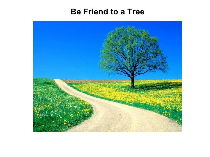 Be Friend to a Tree