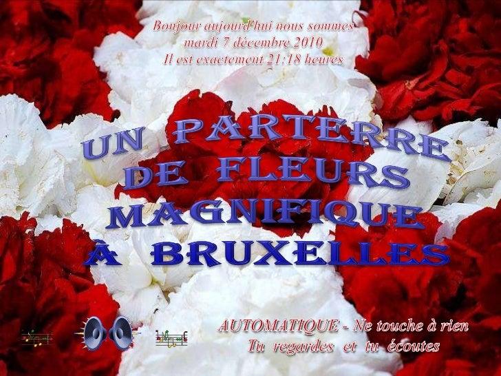 Bruxelles Flower Show