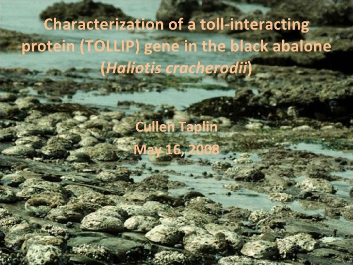 Characterization of a toll-interacting protein (TOLLIP) gene in the black abalone ( Haliotis cracherodii ) Cullen Taplin M...