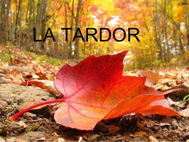 LA TARDOR       MARIBEL