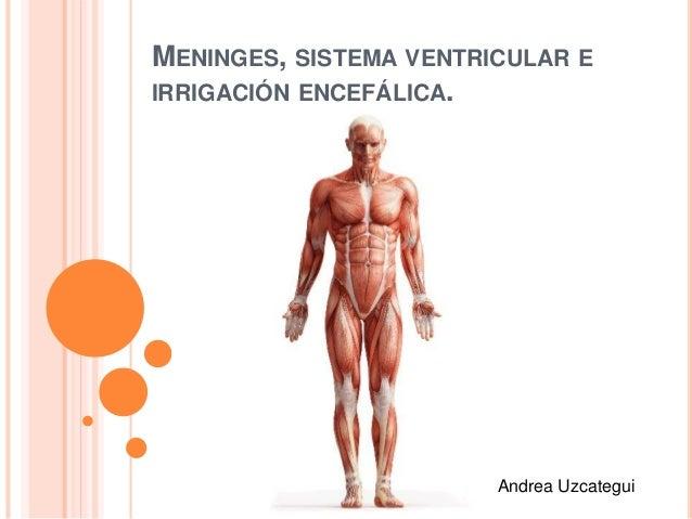 MENINGES, SISTEMA VENTRICULAR E IRRIGACIÓN ENCEFÁLICA. Andrea Uzcategui
