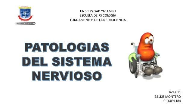 UNIVERSIDAD YACAMBU ESCUELA DE PSICOLOGIA FUNDAMENTOS DE LA NEUROCIENCIA  Tarea 11 BELKIS MONTERO CI: 6091184