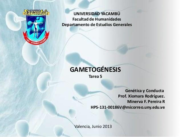 UNIVERSIDAD YACAMBÚ Facultad de Humanidades Departamento de Estudios Generales GAMETOGÉNESIS Tarea 5 Genética y Conducta P...
