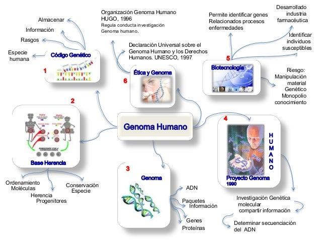 Genoma humano mapa mental gen tica y conducta for En 2003 se completo la secuenciacion del humano