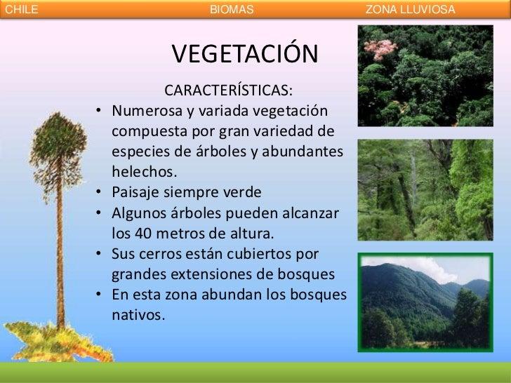 Biomas de chile for Los arboles y sus caracteristicas