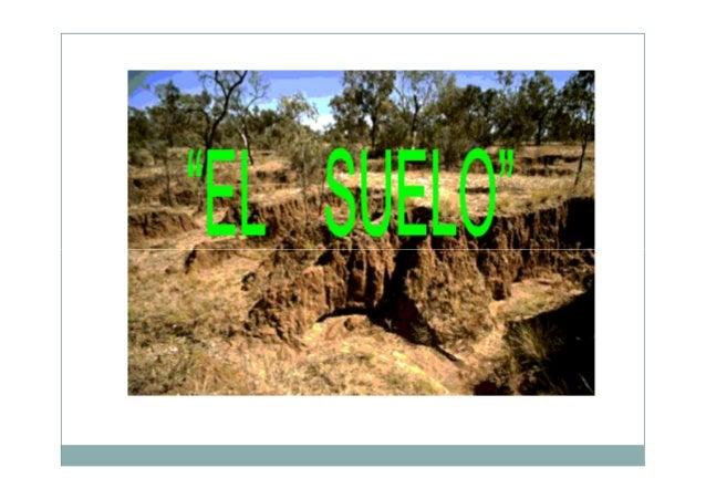 Evita la erosión, ya que las raíces de las plantas fijan el suelo el impiden que este sea arrastrado por la lluvia o el vi...