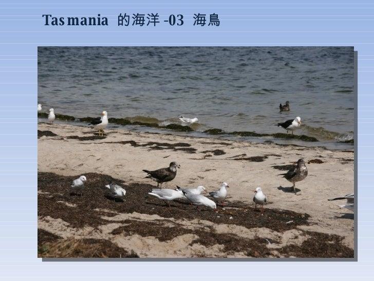 Tasmania  的海洋 -03  海鳥