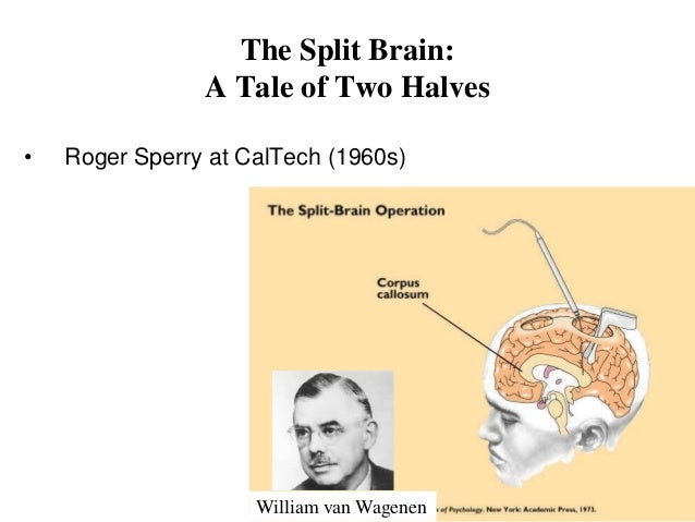 brief brain lateralization theory Left brain-right brain theory myth or reality a brief history split-brain studies of the 1960s gave birth to misuse of the left-brain right-brain theory by popular media the study inferred lateralization by observing connections between functional areas.