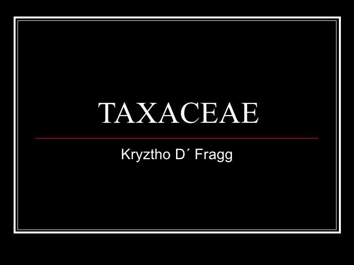 TAXACEAE Kryztho D´ Fragg