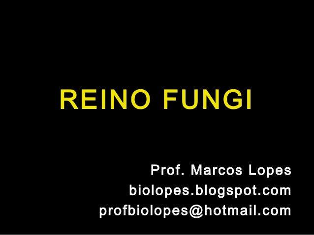 REINO FUNGI         Prof. Marcos Lopes      biolopes.blogspot.com  profbiolopes@hotmail.com
