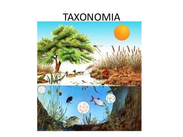 Taxonom a pap grabaci n 1 for Taxonomia de la jirafa