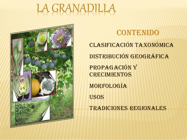contenidoclasificación taxonómicadistribución geográficaProPagación ycrecimientosmorfologíausostradiciones regionales