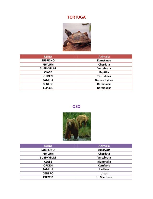 Taxonomia de especies for Taxonomia de la jirafa