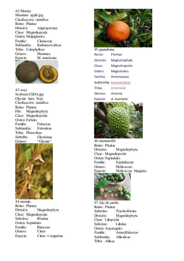 Taxonomia plantas for Clasificacion de las plantas ornamentales